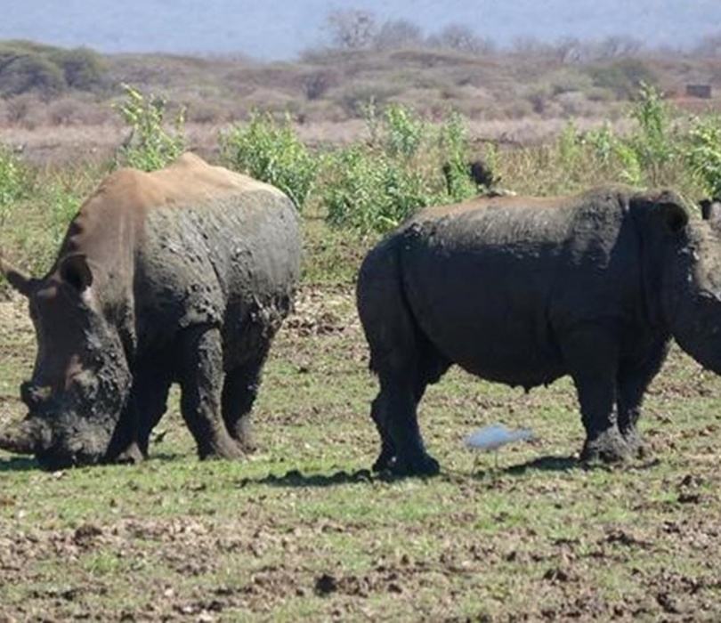 Polowanie w Republice Południowej Afryki